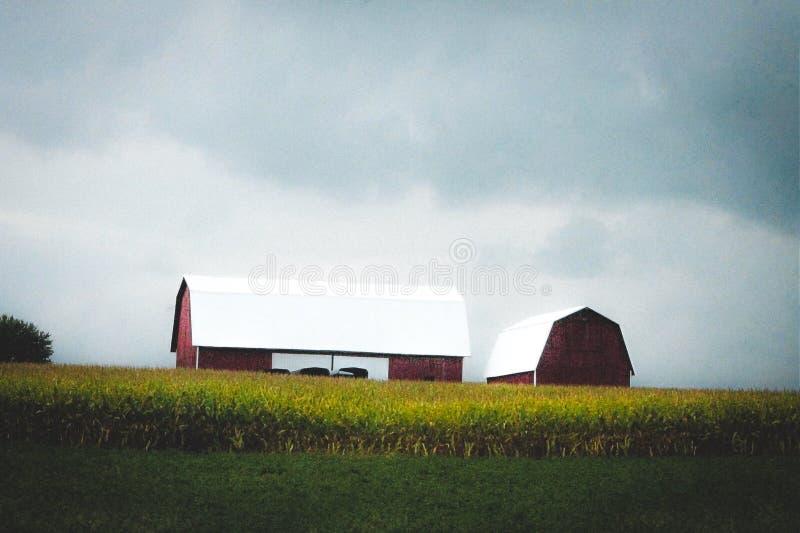 Des échelles de maïs devant une grange rouge image stock
