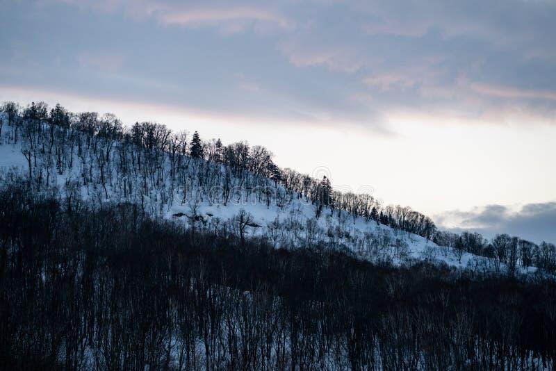 Des arbres couverts de neige dans les montagnes de neige en hiver Paysage forestier des montagnes de neige hivernale photos libres de droits