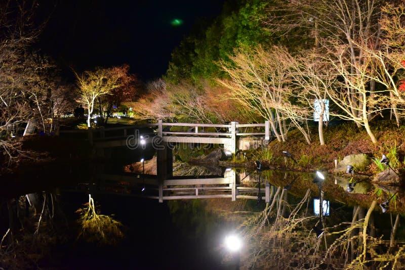 Des arbres illuminés le long de l'étang à Nabana sur Sata au Japon photographie stock libre de droits