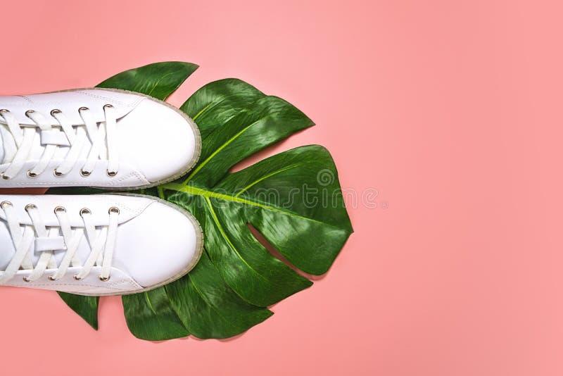 Des baskets blanches sont couchées sur une feuille de monstère verte sur un fond rose corail photo stock