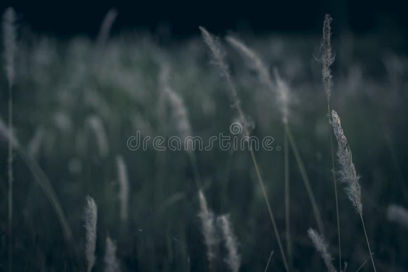 Des Blumenweinlese-Hintergrundes des wilden Grases kleine Blumen, Natur schön stockbilder
