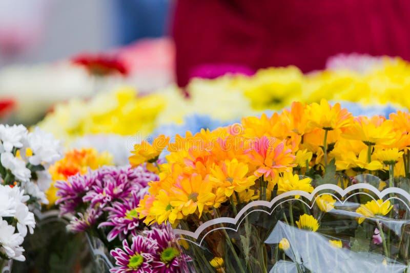 Des bouquets des chrysanthèmes multicolores sont vendus à un marché en plein air Fleurs jaunes, bleues, rouges, pourpres images libres de droits