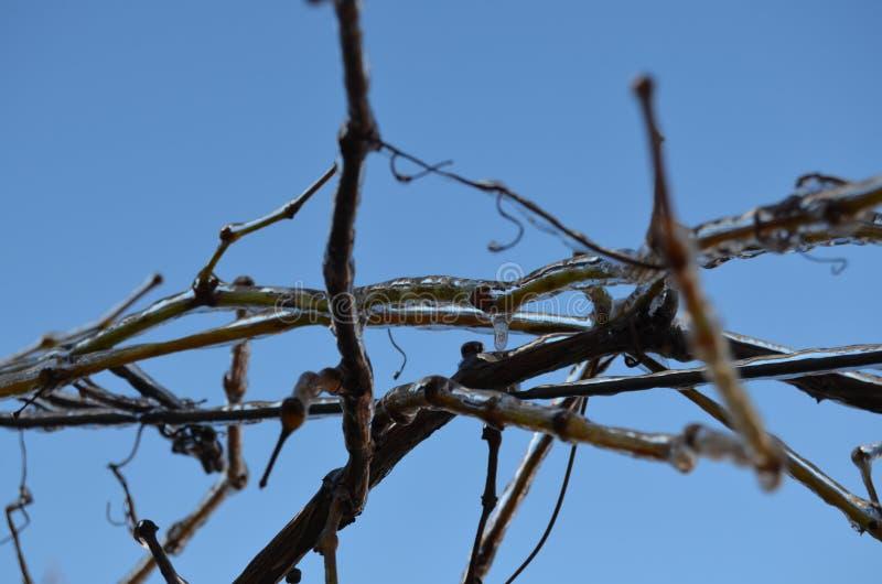 Des branches sont couvertes de la glace images stock