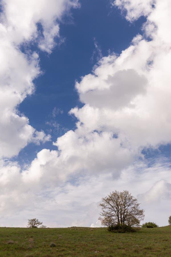 Des certains usines et arbre au-dessous d'un ciel bleu avec un grand cloudscape image stock