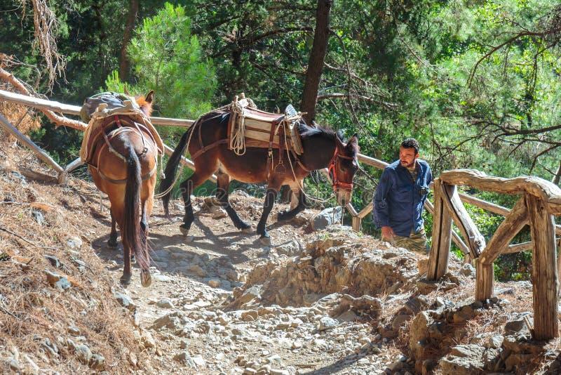 Des chevaux menés par un guide, sont employés pour transporter les touristes fatigués en Samaria Gorge dans Cret central photo stock