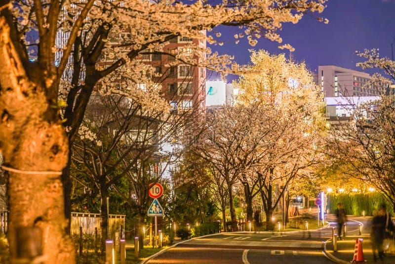 Des fleurs de cerisier d'Akasaka, de Minato-ku, de Tokyo et de la ville photographie stock libre de droits