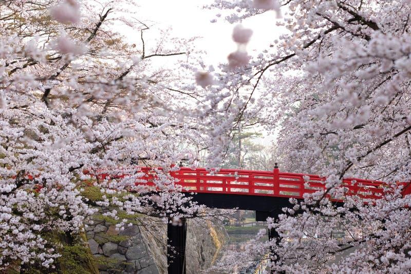 Des fleurs de cerisier japonaises sont vues avec le pont rouge, Japon image libre de droits