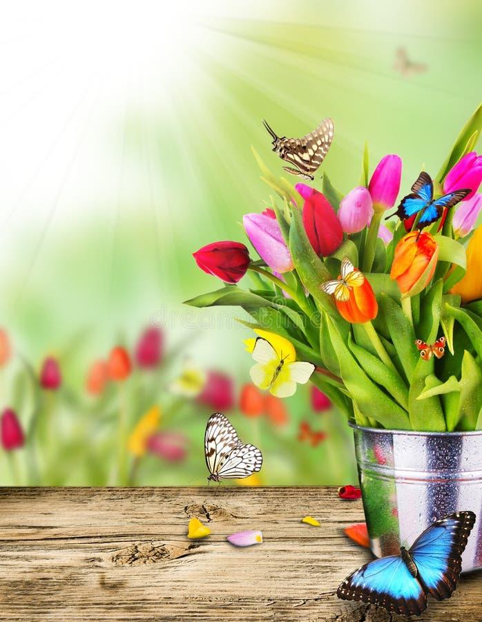 Des Frühlinges Leben noch stockbilder