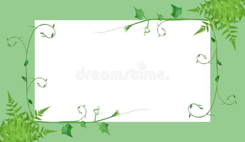 Des frontières de vue et les dispositions créatives sont faites à partir des feuilles tropicales tordues, d'isolement sur le fond photographie stock
