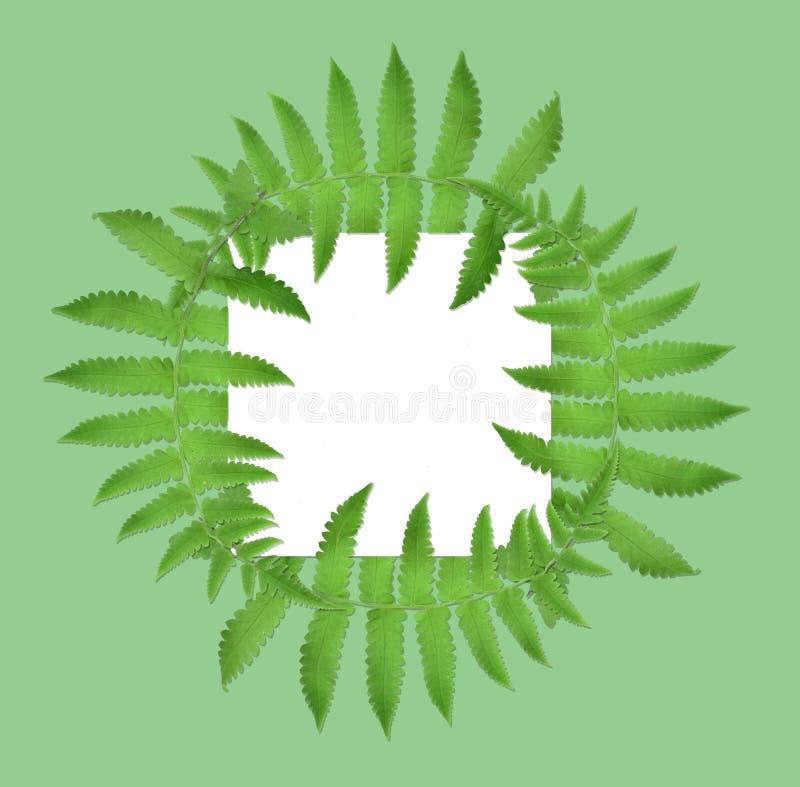 Des frontières de vue et les dispositions créatives sont faites à partir des feuilles tropicales tordues, d'isolement sur le fond image stock