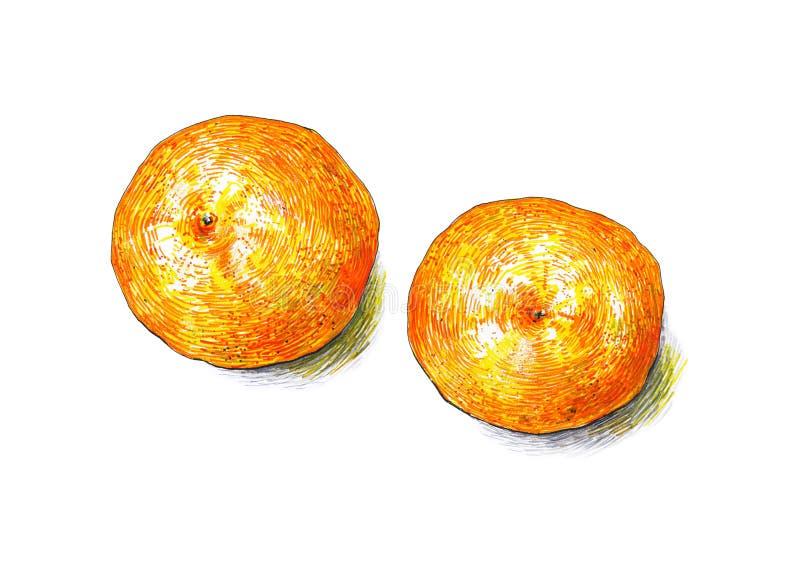Des fruits de mandarines sont isolés sur un fond blanc Colorez les stylos feutres de croquis Fruit tropical Travail manuel Dessin illustration libre de droits