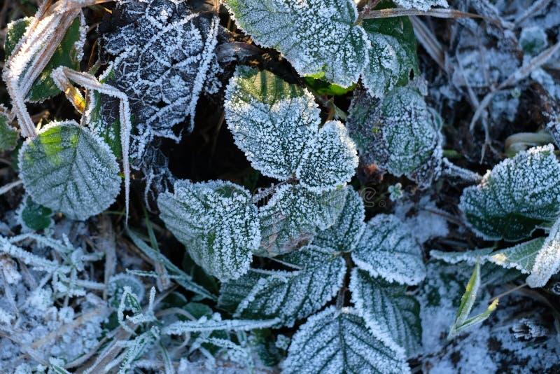 Des gels sont vus sur des feuilles et des herbes chez Kinderdijk, Alblasserdam aux Pays-Bas photo libre de droits