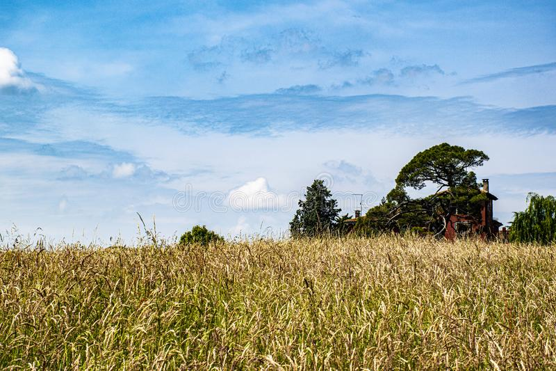 Des Gr?nbaums des blauen Himmels gelbes Feld des roten Hauses stockfotos