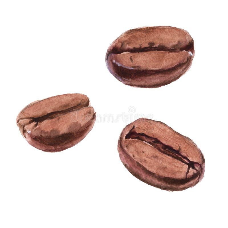 Des grains de café sont rôtis D'isolement sur un fond blanc Waterc illustration libre de droits
