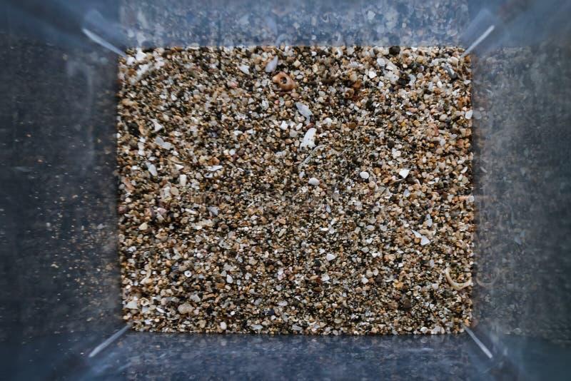 Des grains de sable de la mer sont trouvés sur écosser des plages Vue en gros plan de poussière abrasive dans la boîte Vue su image libre de droits