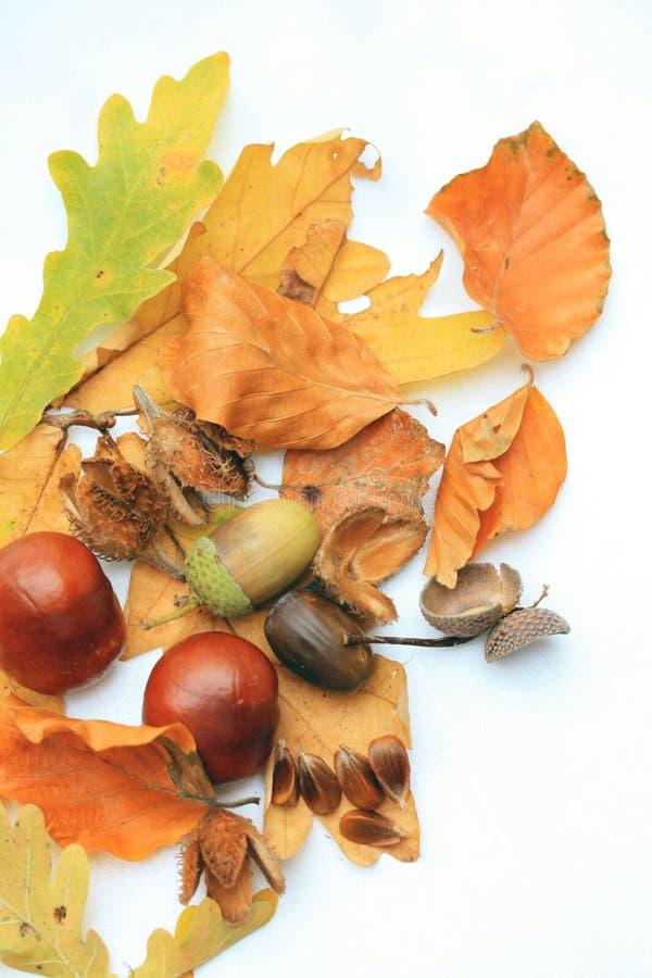 Des Herbstes Leben noch stockbilder