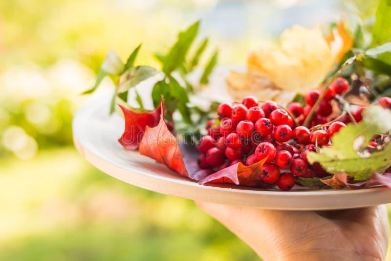 Des Herbstes Leben noch Eberesche, Viburnum, Äpfel Früchte und Beeren auf einer hölzernen Platte Hintergrund der Herbstblätter Ro lizenzfreie stockbilder