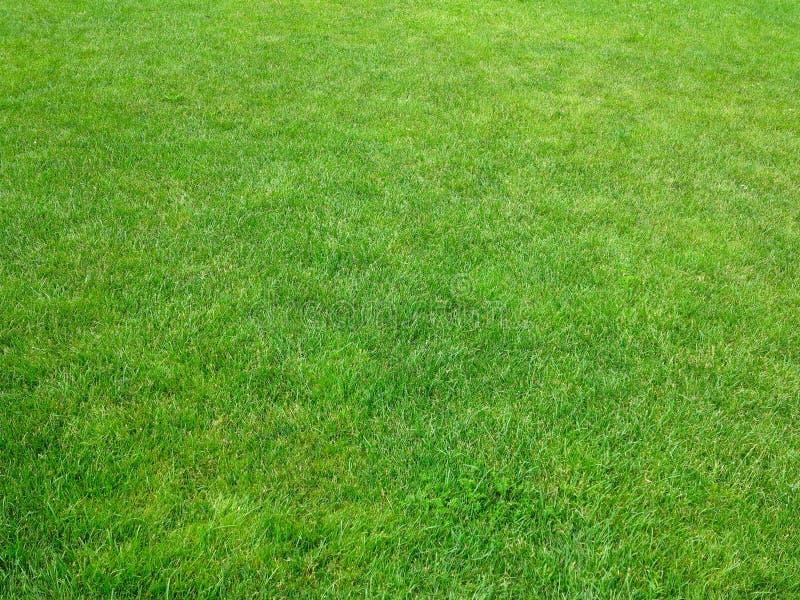 Des Hintergrundrasen-Musters des grünen Grases strukturierter Hintergrund stockbilder
