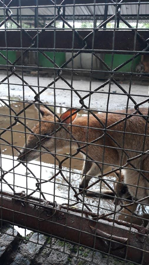 des kangourous aiment être vus par des visiteurs de zoo images stock