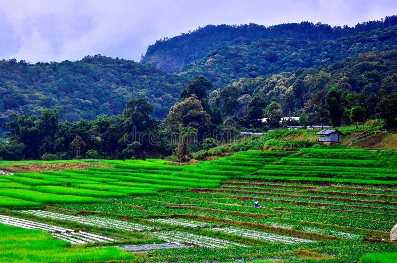 Des lacets de riz dans le village de Mae Klang Luang, Chiangmai Thaïlande photographie stock libre de droits