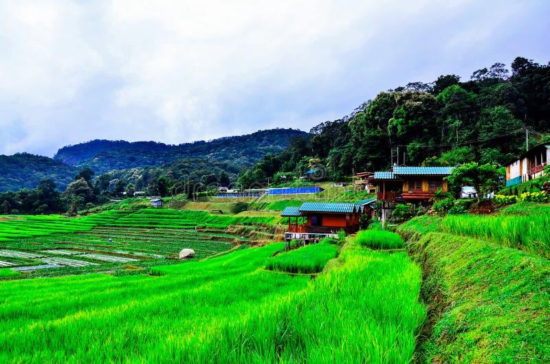 Des lacets de riz dans le village de Mae Klang Luang, Chiangmai Thaïlande images libres de droits