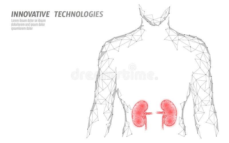 Des Mann-Schattenbildes 3d des Niereninneren organs niedriges geometrisches Polymodell Urologiesystem-Medizinbehandlung Zukünftig lizenzfreie abbildung