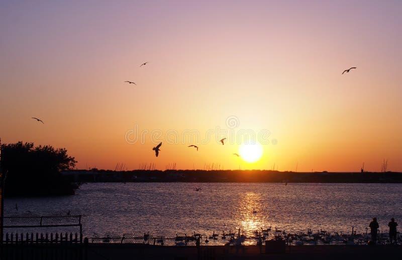 Des mouettes volent au-dessus d'un couché de soleil doré, se réfléchissant à la surface d'un lac où des personnes anonymes r image stock