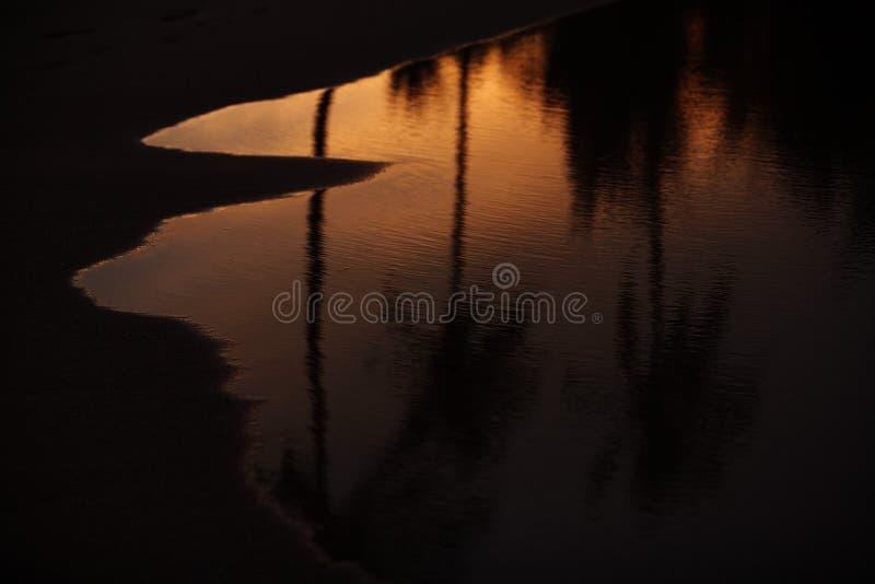 Des paumes sont reflétées dans l'océan au coucher du soleil photo stock