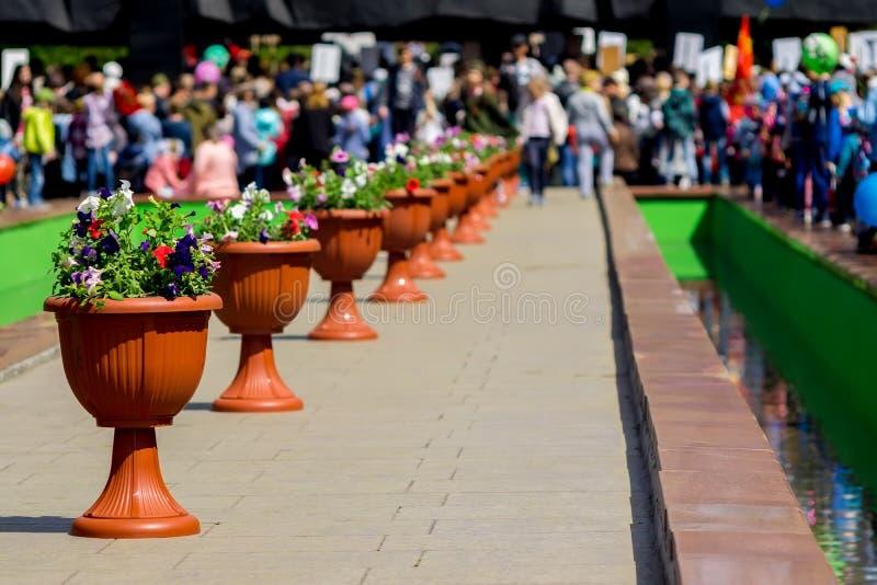 Des pots de fleurs sont plac?s dans une rang?e photo libre de droits