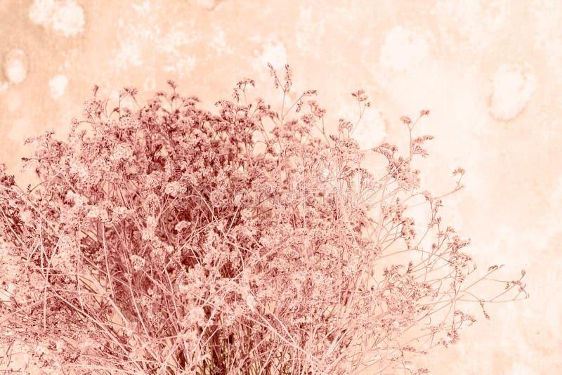 Des trockenen kleinen beige Pastellhintergrund Blumen-Blumenstraußes der Linsenunschärfe stockbilder