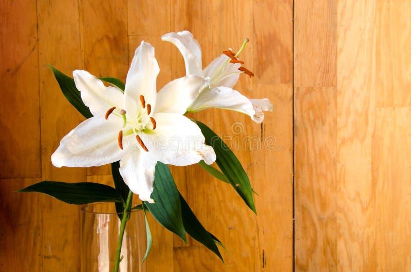 Des Weiß Blume lilly im transparenten Glas auf hölzernem Hintergrund stockbild