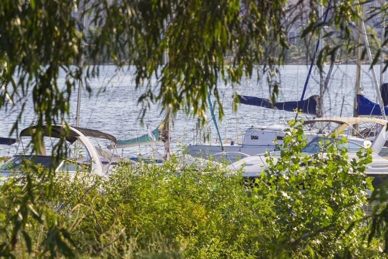 Des yachts amarrés peuvent être vus à travers les branches d'arbre images libres de droits
