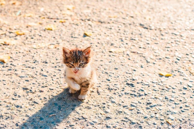 Desafortunado enfermo sin hogar poco gatito en la calle foto de archivo