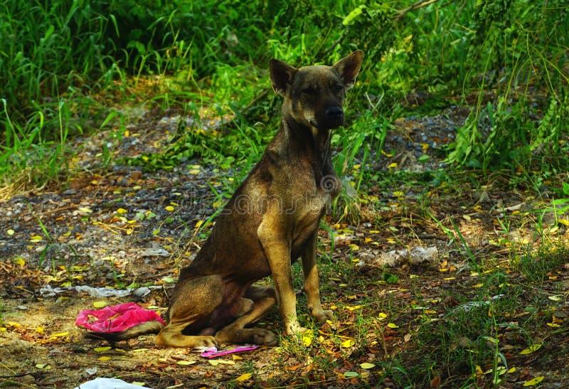 Desamparados hambrientos del perro perdido fotografía de archivo