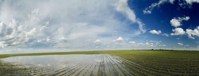 Desastre agrícola, cosechas inundadas de la soja foto de archivo
