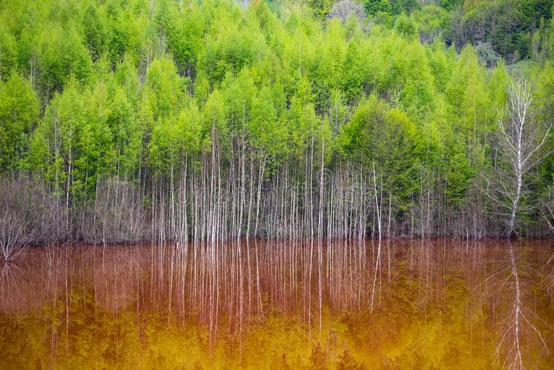 Desastre ecol?gico: contaminaci?n del cianuro en el lago Geamana cerca de Rosia Montana, Rumania imágenes de archivo libres de regalías
