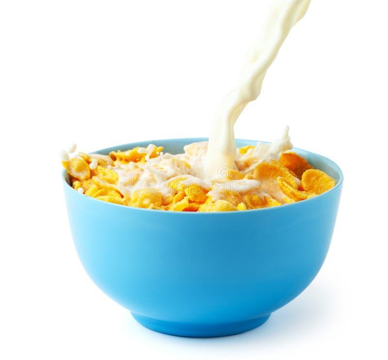 Desayuno seco de los copos de maíz con leche La corriente de la leche con queso y chapoteo vierte en la placa azul con el cereal  foto de archivo