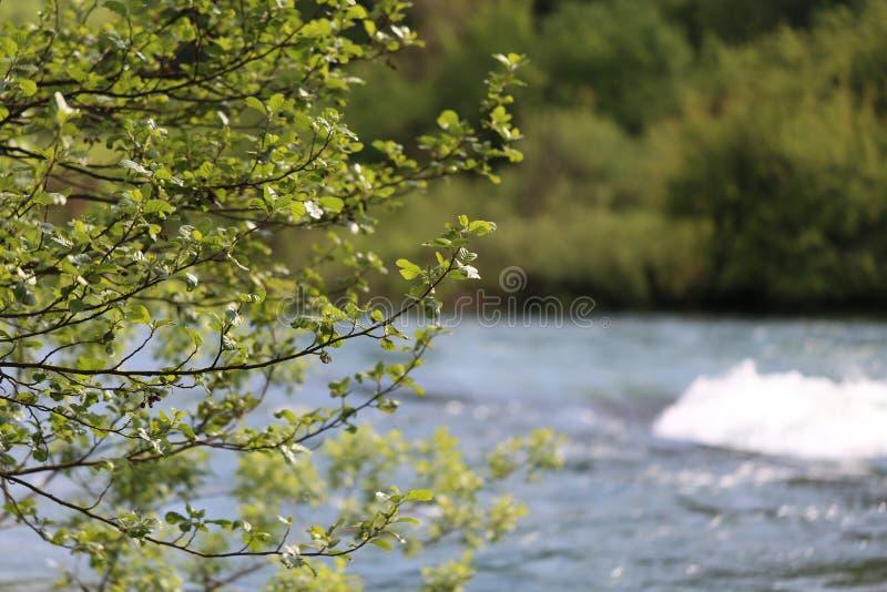 Desbordamiento en el río imágenes de archivo libres de regalías