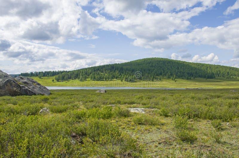 descansar em taiga ao fundo das altas montanhas de Altai Russia foto de stock