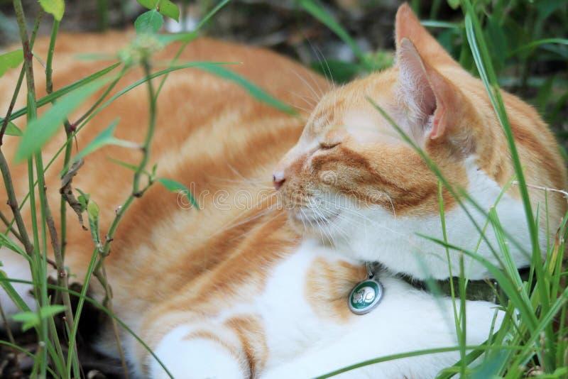 Descanso amarelo do gato malhado fotografia de stock