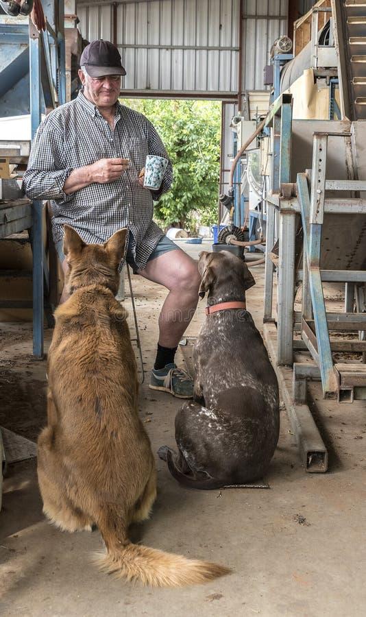 Descanso para tomar café - hombre y sus perros imagenes de archivo