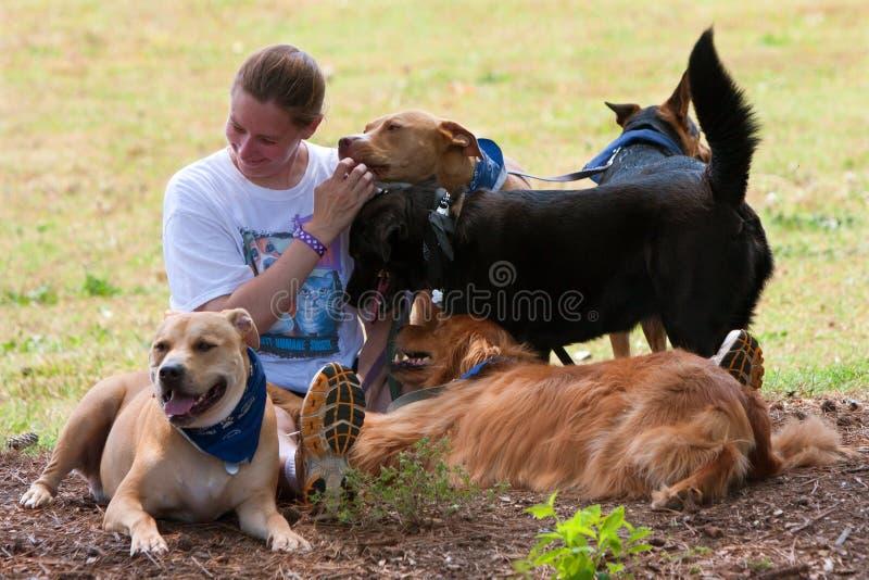 Descansos fêmeas dos proprietários do cão na máscara com seus cães foto de stock royalty free