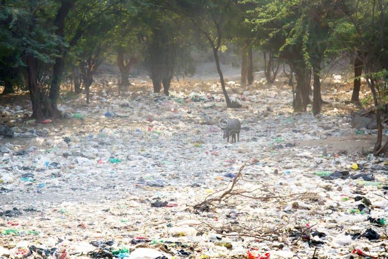 Descarga de la arboleda del acacia de la basura n del hogar, la India imagen de archivo libre de regalías