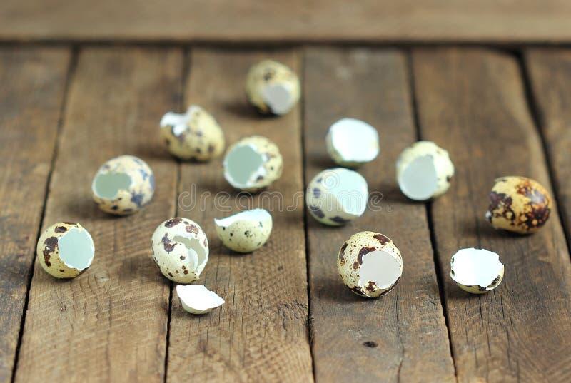 Descasca los huevos de codornices foto de archivo