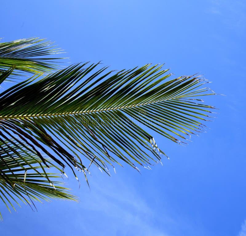 descasque a baía Ásia de tao da folha na árvore branca Tailândia da ilha e imagens de stock royalty free