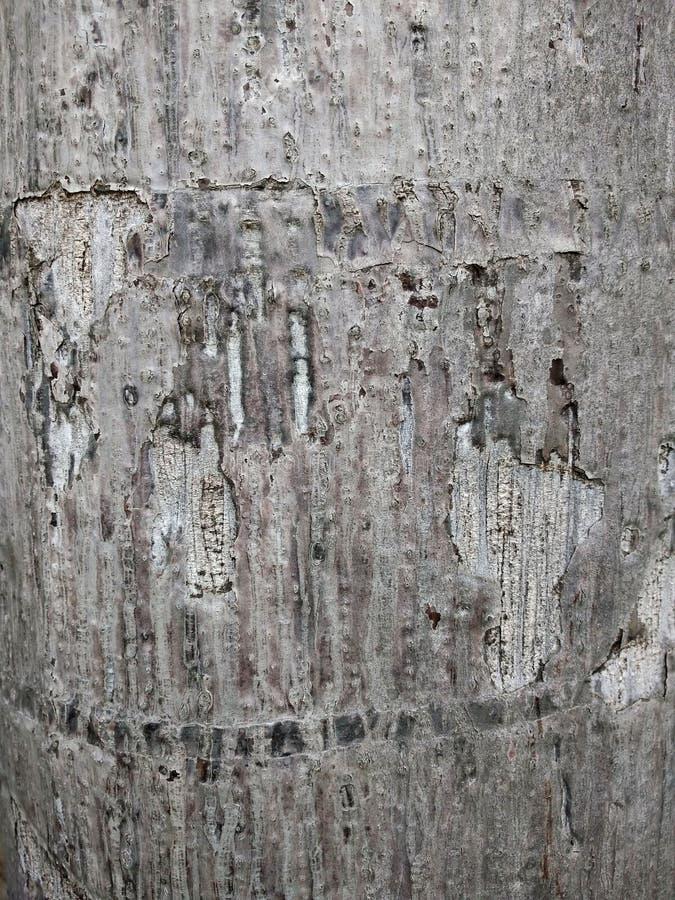 Descasque Brown, a superfície da casca, descasque o marrom no jardim, Crac foto de stock royalty free