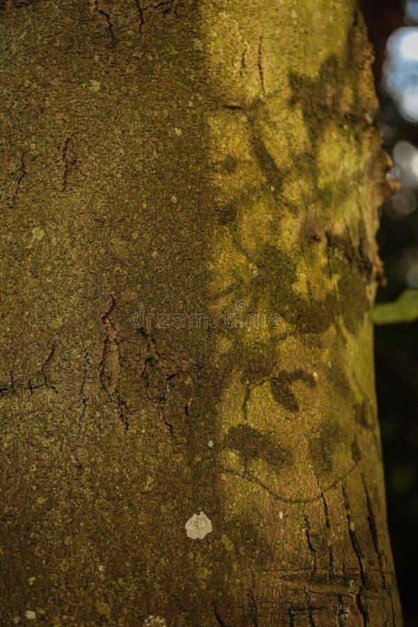 Descasque em uma árvore em um dia ensolarado fotos de stock