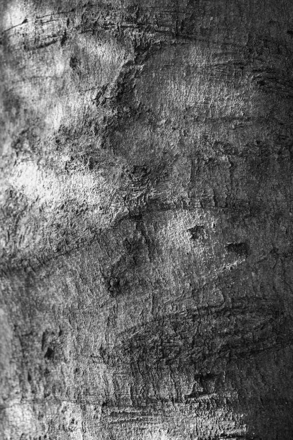 Descasque em uma árvore em um dia ensolarado fotos de stock royalty free