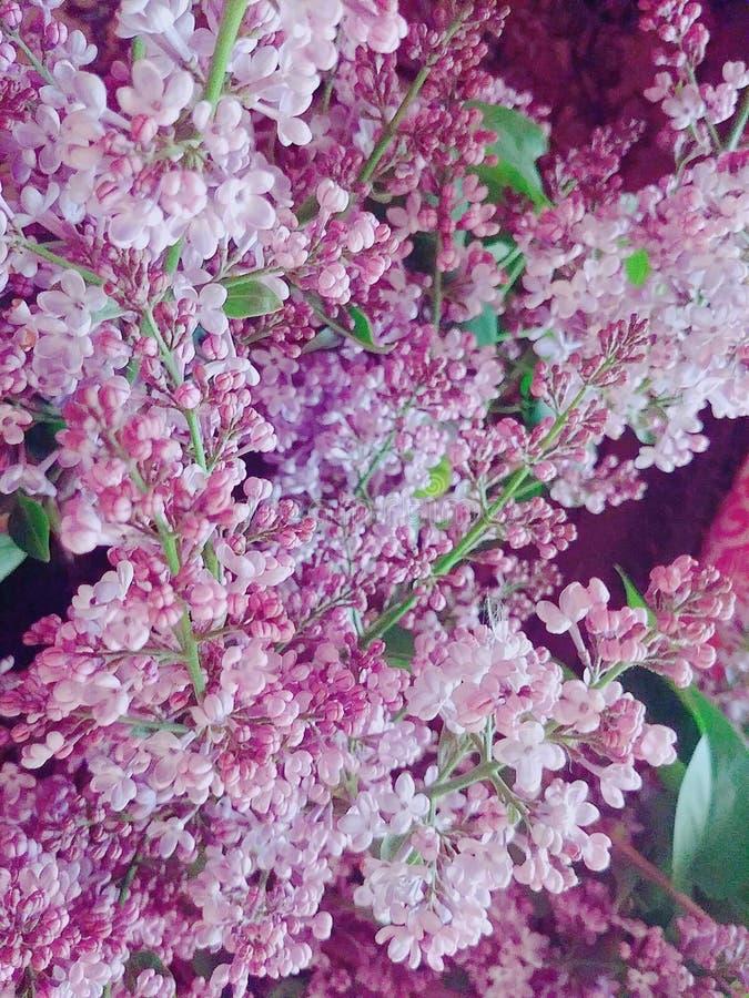 Descenso de la flor imagen de archivo