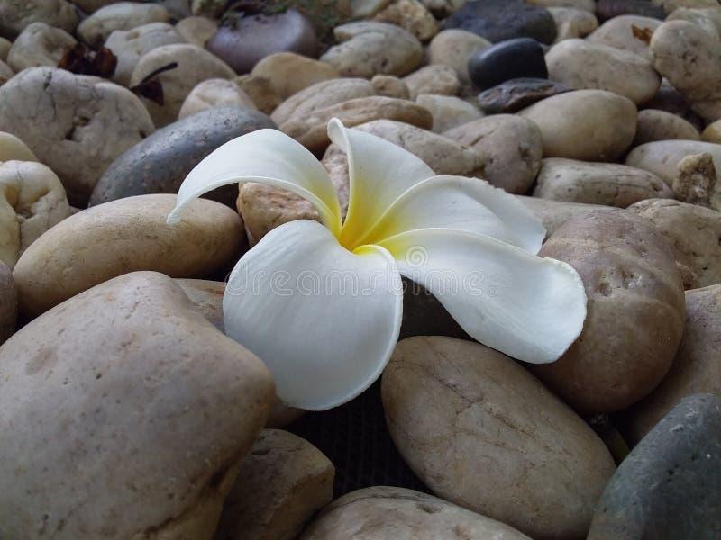 Descenso de la flor al piso fotografía de archivo libre de regalías